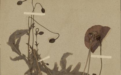 L'herbier secret de Giverny, Monet et Hoschedé en botanistes